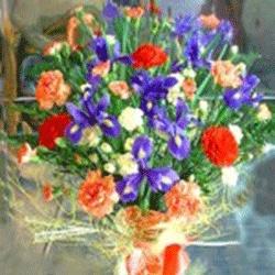 Spring flowers Christchurch