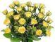 Christchurch roses yellow